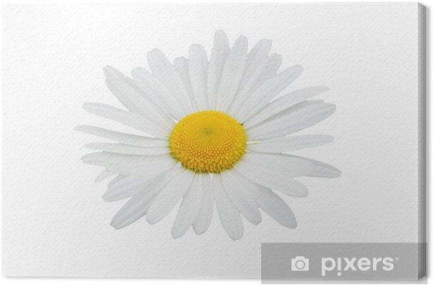 Obraz na płótnie Biały kwiat - Tekstury