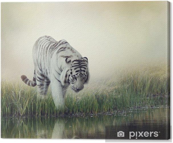 Obraz na płótnie Biały tygrys - iStaging