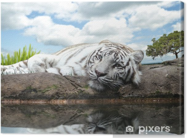 Obraz na płótnie Biały tygrys - Tematy