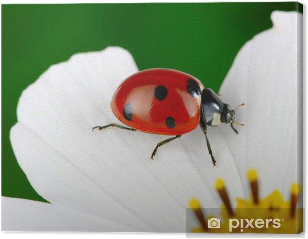 Obraz na płótnie Biedronka i kwiatów - Inne Inne
