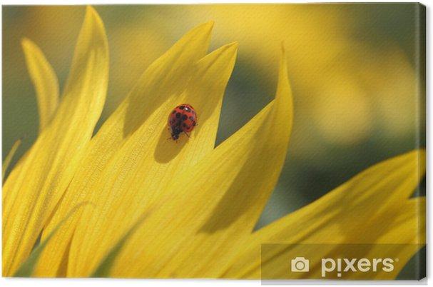Obraz na płótnie Biedronka i słonecznika - Pory roku