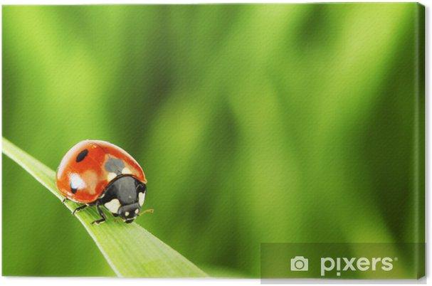 Obraz na płótnie Biedronka na trawie - Inne Inne