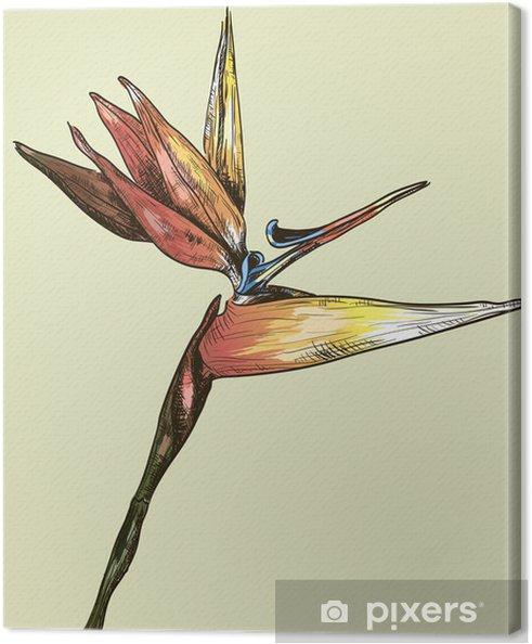 Obraz na płótnie Bird of Paradise Flower - Kwiaty