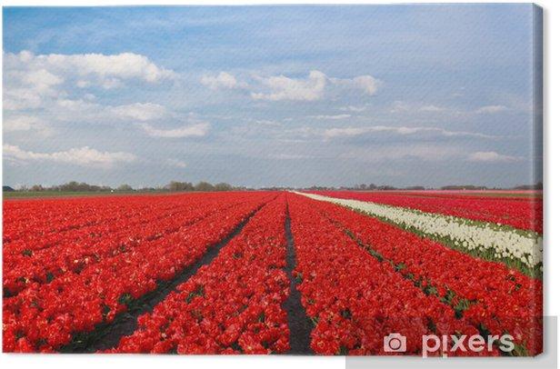 Obraz na płótnie Błękitne niebo nad czerwonym polu tulipanów - Pory roku
