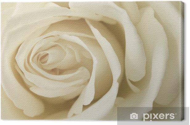 Obraz na płótnie Bliska obraz śmietaną róży - Tematy