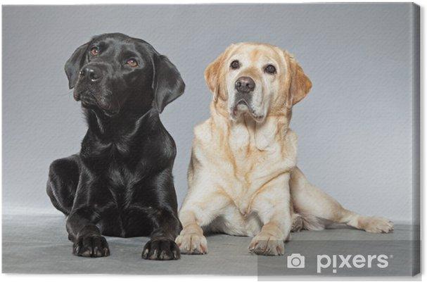 Obraz na płótnie Blondynka i czarny pies labrador retriever razem. Studio strzał. - Ssaki