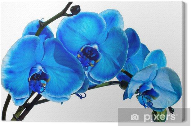 Obraz na płótnie Blue Orchid - Style
