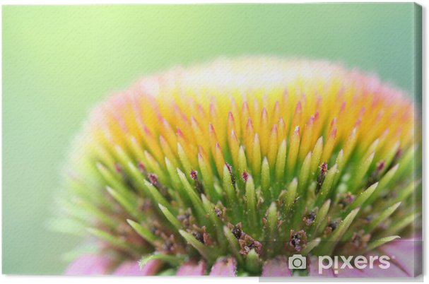Obraz na płótnie Blumenknospe - Kwiaty