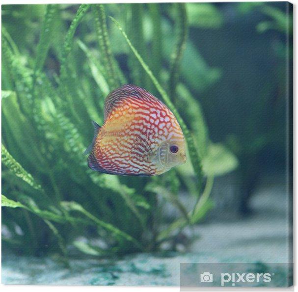 Obraz na płótnie Blurp - Zwierzęta żyjące pod wodą