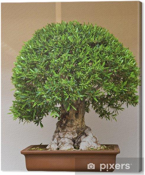 Obraz na płótnie Bonsai - Dom i ogród