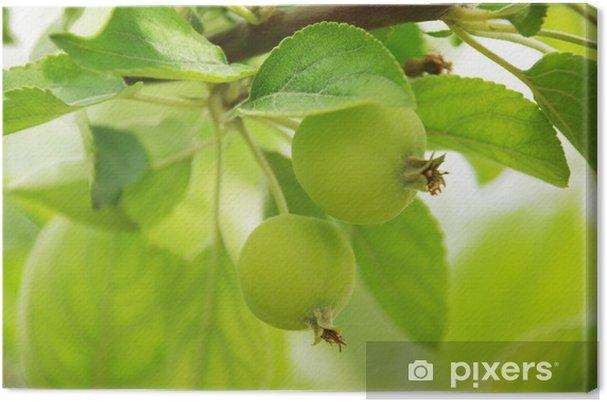 Obraz na płótnie Branch - jabłoń - Rośliny