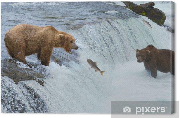 Obraz na płótnie Brązowy niedźwiedź grizzly łososia w rzece polowania, Alaska, Katmai - Tematy