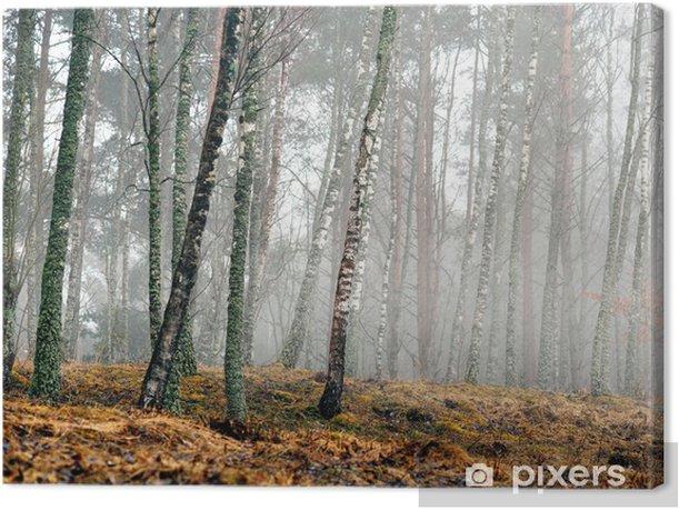 Obraz na płótnie Brzoza drzew wczesną wiosną - Tematy