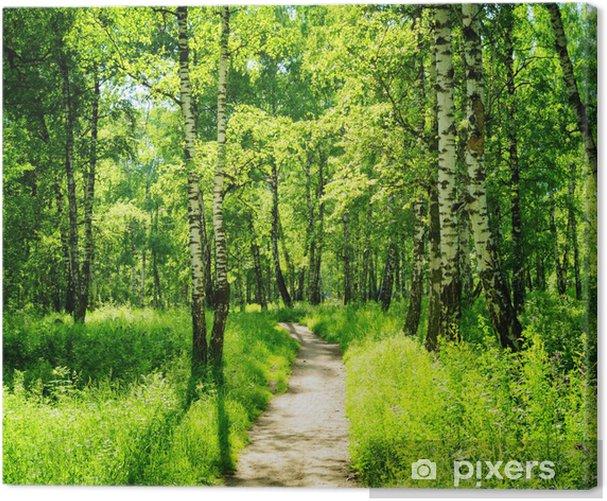 Obraz na płótnie Brzozowy las w słoneczny dzień. Zielony las w lecie - Las