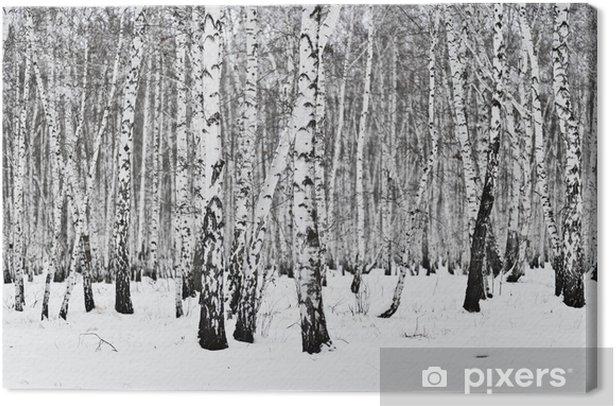 Obraz na płótnie Brzozowy las - Lasy