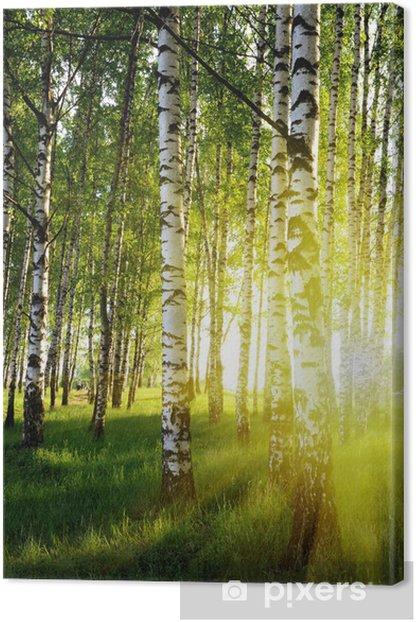 Obraz na płótnie Brzozy w lesie latem - Style