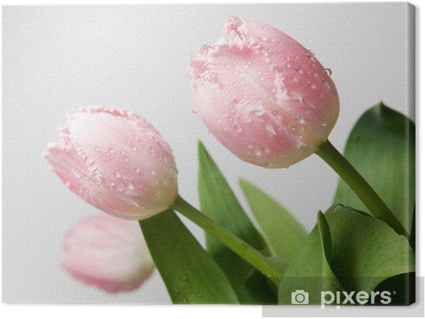 Obraz na płótnie Bukiet świeżych kwiatów wiosna tulipan z kropli wody - Tematy