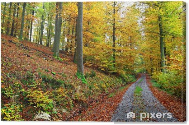 Obraz na płótnie Bukowy jesienią - Drzewa