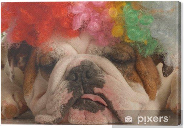 Obraz na płótnie Buldog angielski z kolorowych Klaun wig - Ssaki