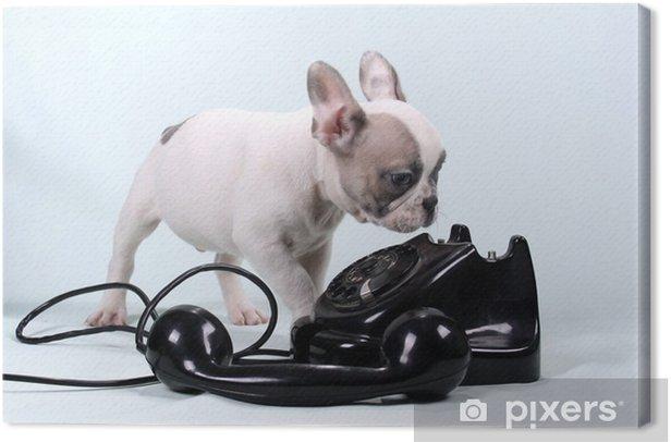 Obraz na płótnie Buldog francuski puppy i telefon - Buldogi francuskie