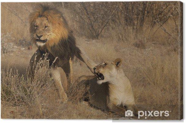 Obraz na płótnie Bunt lwica - Tematy