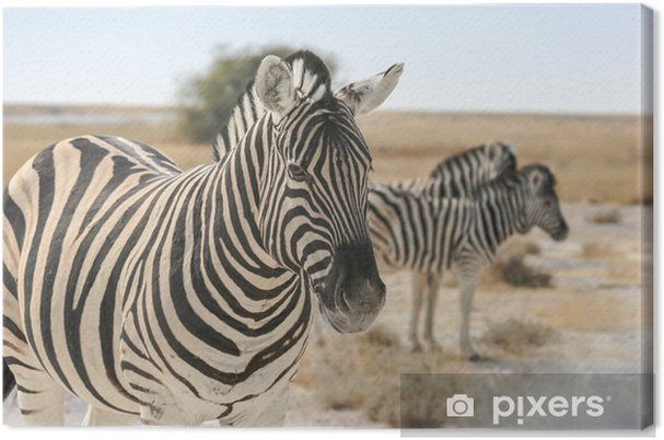 Obraz na płótnie Burchell Zebra - Tematy