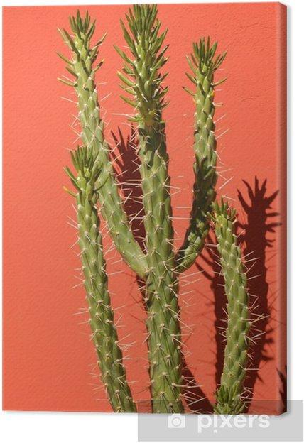Obraz na płótnie Cactus tekstury tła - Podróże