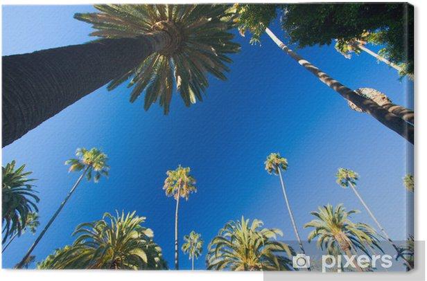 Obraz na płótnie California palmy - Palmy