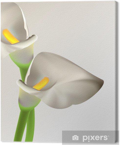Obraz na płótnie Calla kwiaty - Uroda i pielęgnacja ciała