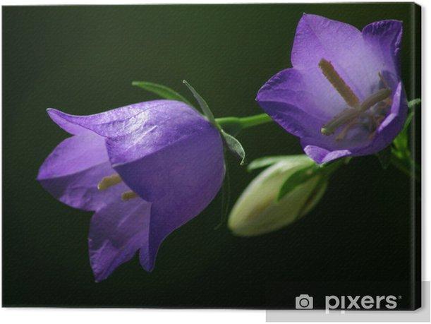 Obraz na płótnie Campanula1 - Kwiaty