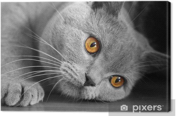 Obraz na płótnie Cat eye - Ssaki