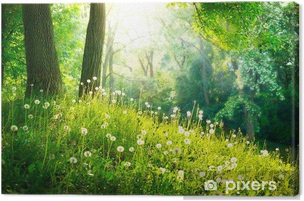 Tylko na zewnątrz Obraz na płótnie Charakter wiosny. piękny krajobraz. zielona trawa OJ93