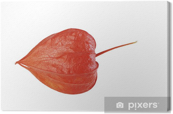 Obraz na płótnie Chinese Lantern Lily - Kwiaty