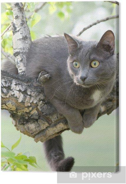 Obraz na płótnie Ciekawy kot na drzewie - Ssaki