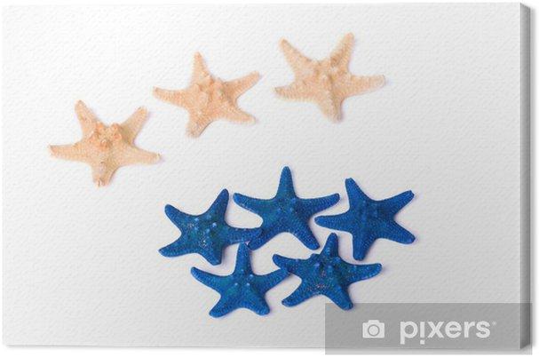 Obraz na płótnie Ciemne niebieskie i beżowe rozgwiazdy na białym tle - Kwiaty