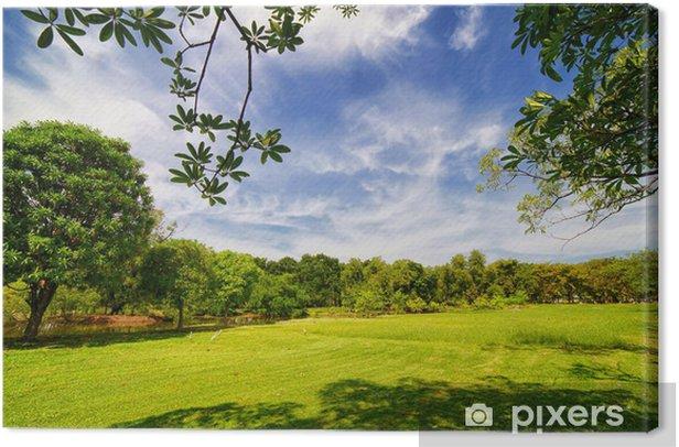 Obraz na płótnie City park z zielonej trawy i niektórych drzew - Tematy