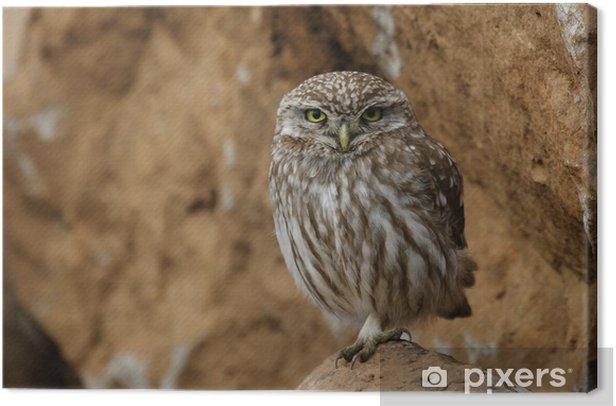 Obraz na płótnie Civetta - Ptaki