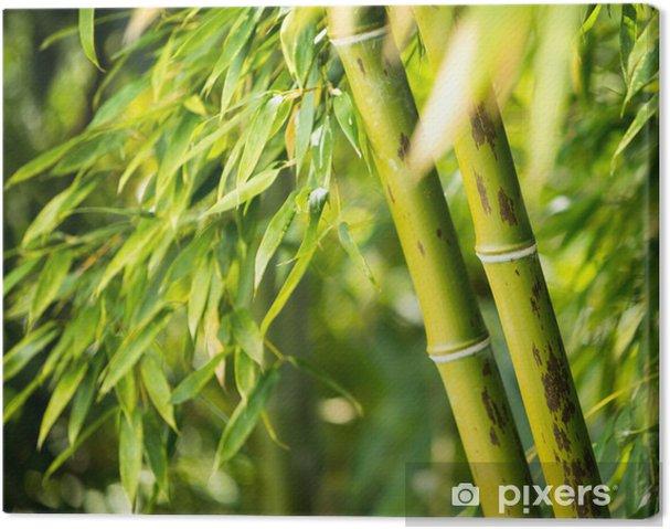 Obraz na płótnie Close-up z bambusa - Tematy