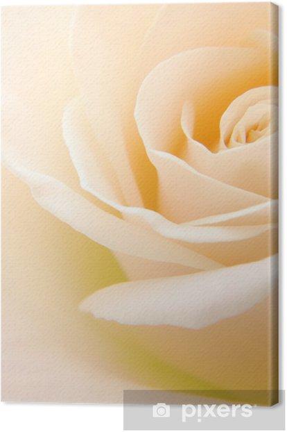 Obraz na płótnie Close-up z delikatnej kremowej białej róży kwiat - Tematy