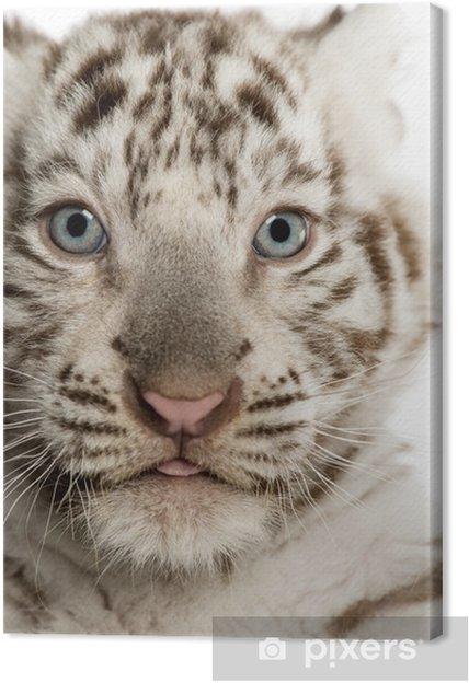 Obraz na płótnie Close-up z White Tiger cub, 2 miesiące - Tematy
