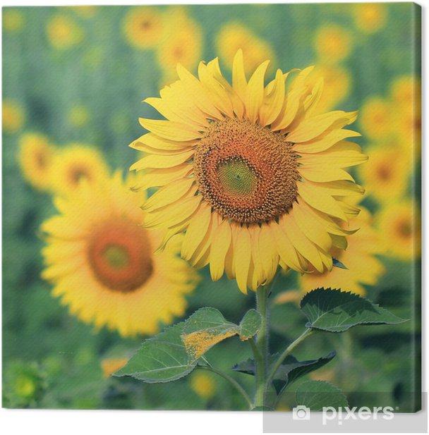 Obraz na płótnie Closeup piękne słonecznika - Tematy