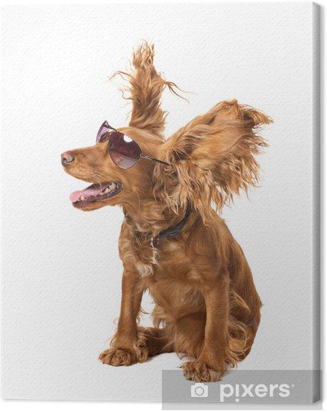 Obraz na płótnie Cocker pies w okularach - Ssaki