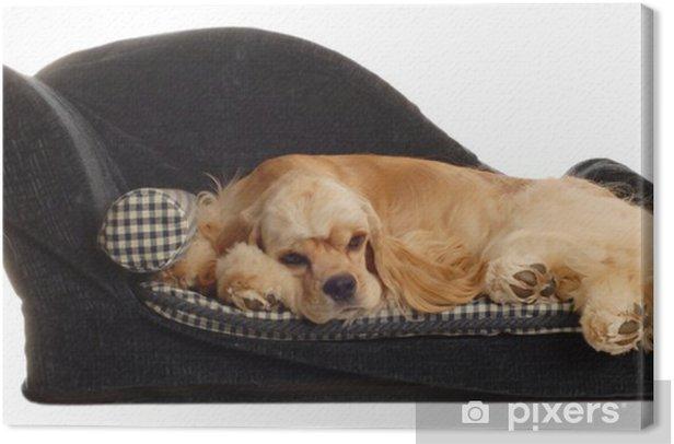 Obraz na płótnie Cocker spaniel psa spania w łóżku - Ssaki