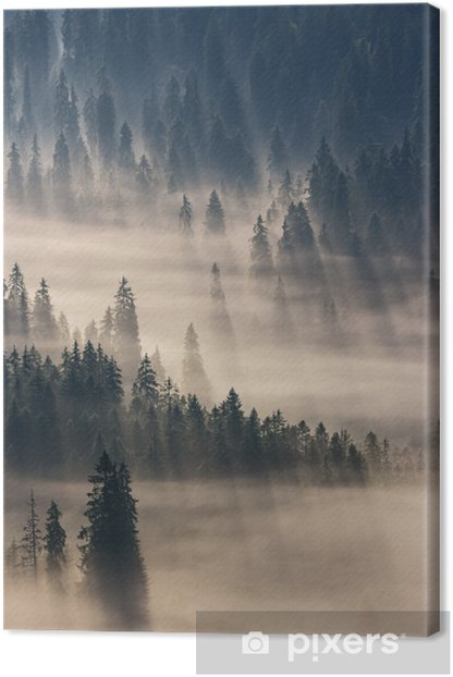 Obraz na płótnie coniferous forest in foggy mountains - Lasy