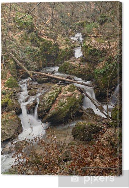 Obraz na płótnie Creek w lesie - Pory roku