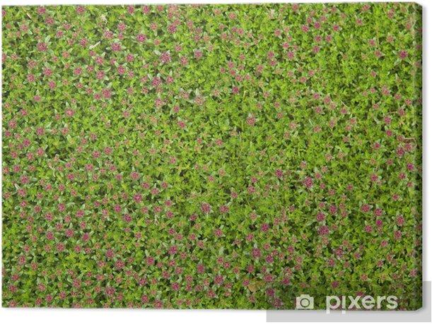 Obraz na płótnie Creeping Moss - Rośliny
