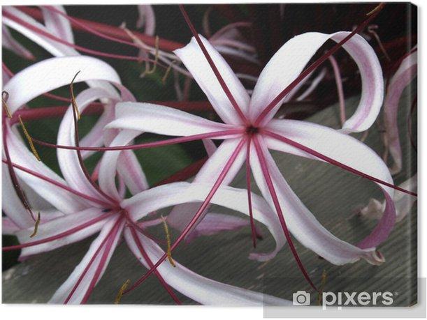 Obraz na płótnie Crinum lily - Kwiaty