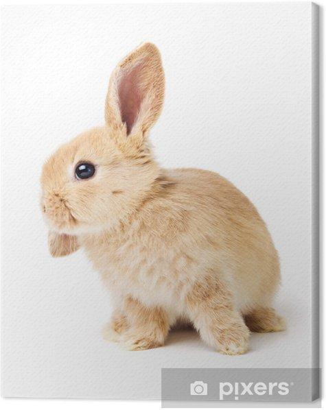 Obraz na płótnie Cute Easter Rabbit - Ssaki