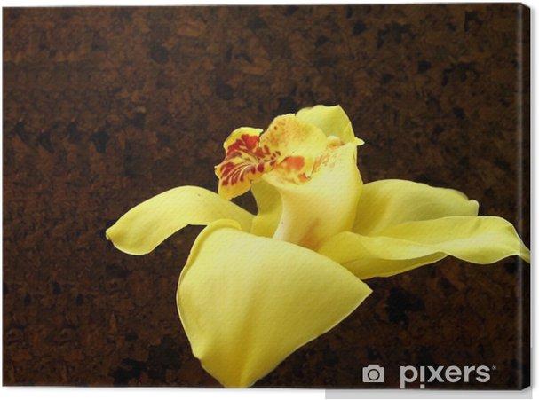 Obraz na płótnie Cymbidium - Kwiaty