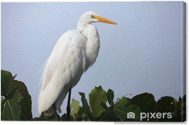 Obraz na płótnie Czapla biała na drzewie w Kostaryce, белая цапля - Ptaki